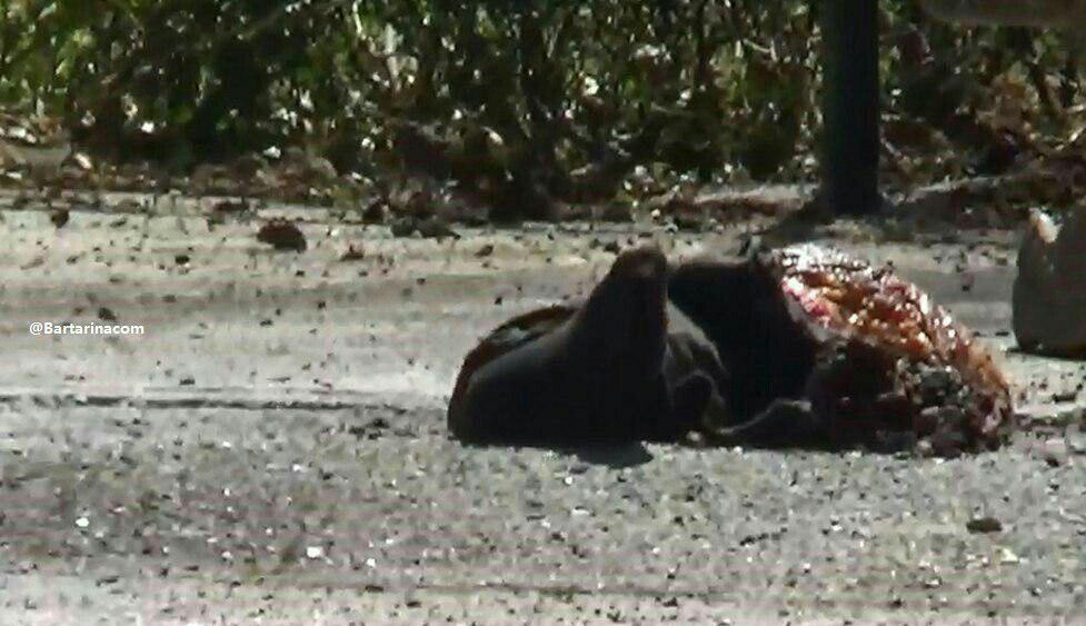 سر جدا شده یکی از عوامل تروریستی + عکس اجساد